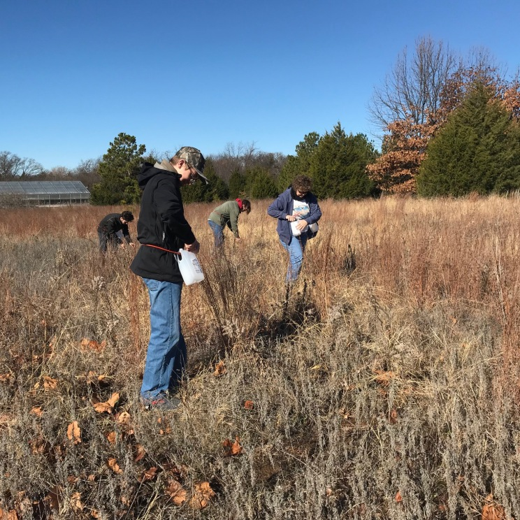 Collecting seeds from a nearby remnant prairie.